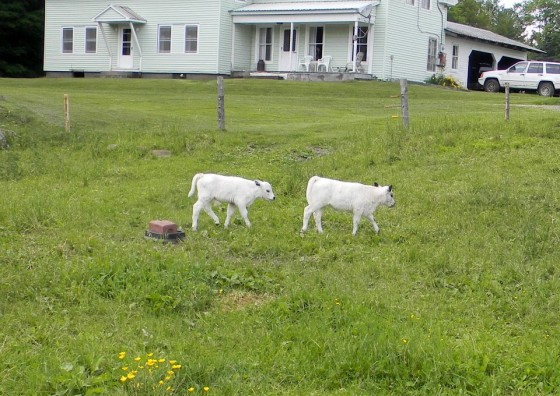 "Bob from Vermont wrote: ""We raise our own meat (beef, chicken and pork) on our organic farm. No antibiotics here."""
